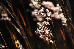 Sale de nuevo mi sol ( de a poquito) (Luciana García) Tags: arg argentina cordoba calmayo san agustin sierras de fllora flor nature naturaleza nikon d7200 rosa pink