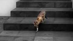 DE NOCHE TODOS LOS GATOS SON PARDOS (FOTOS PARA PASAR EL RATO) Tags: gatos cats
