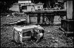 Graveyard (Ramon Quaedvlieg Photo) Tags: graveyard sxm sintmaarten tombstone headstone decay old grave toy blackandwhite blackandwhitephotography abandoned caribbean journalism travel travelphotography destroyed littlebayroad gravestone