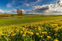 Springtime along the dyke (PhotoChampions) Tags: dike dyke spring springtime landscape meadow clouds blue green yellow dandelion deich frühling landschaft wiese elbwiesen himmel wolken blau grün gelb löwenzahn elbe hamburg germany deutschland sky