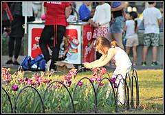 Future Photographer (bigbrowneyez) Tags: girl littlegirl future futurephotographer tulip flowers fiori belli beautiful fresh festivale flickrfestivale sunny kids children bright fence charming friendly dowslake ottawa canada candid nature natura fun sweet adorable