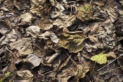Mt Wilson 20 (trisharooni) Tags: australia autumn mtwilson breenhold
