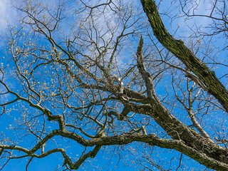 Twisted Branches Under A Blue Sky
