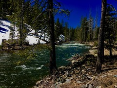 Great Trout Water (The VIKINGS are Coming!) Tags: sierras springrunoff truckee river fishing fly alpine snow blueribbon rainbow brown trout