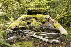 1969 Ford Galaxie 500 (Curtis Gregory Perry) Tags: 1969 ford galaxie 500 abandoned car automobile portland oregon pdx forest park moss trees woods ruin grille front end headlights chrome bumper smashed rusty rusted decay abandon crushed dented old green nikon d810 24mm