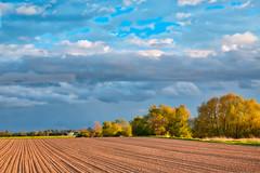 Farmland II