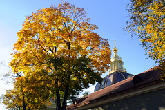 DSC_4156 (Dmitry Mahahurov) Tags: hometown stpetersburg питер северная столица россия russia mahahurov махахуров