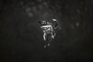 Monster ~ Special Dog Photography Workshop Claudio Piccoli&Alicja Zmysłowska Italy 2017