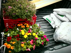 A truck full of goodness ! (Dave* Seven One) Tags: wood family flowers plants flower yard truck project fun spring digging soil dirt yardwork flowerbox planterbox getdirty flickrandroidapp:filter=none