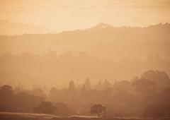 Stanford Dish nature park (miemo) Tags: california park travel trees sunset summer usa nature silhouette forest landscape haze dusk olympus hills telephoto stanford paloalto hazy omd thedish em5 panasonic100300mm