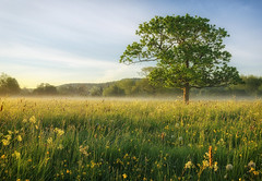 Mother Natures Beauty (jactoll) Tags: morning light sunlight mist tree landscape dawn countryside spring nikon day meadow clear warwickshire lonetree alcester d7000 jactoll nikcolorefexpro4