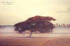 The Lone Tree (Hari V Bhagirath) Tags: tree nature hari irinjalakuda bhagirath