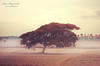 The Lone Tree (Hari V Bhagirath) Tags: tree nature hari irinjalakuda bhagirath