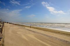 Windswept Hardelot plage