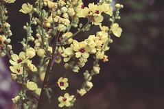 (Lara Esse) Tags: flowers mountain 50mm nikon d90 gremiasco
