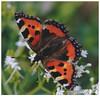 053 (imagepoetry) Tags: summer flower detail nature beauty closeup butterfly garden blossom bokeh schmetterling naturelover imagepoetry sonyalpha ipoetry nex5r