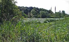 IJssel, Tichelgaten (Gerard Mengerink) Tags: ijssel rivier plassen landschappen meren tichelgaten