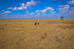 On the Road to Nata (letizia.barbi) Tags: africa road safari botswana