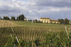 Cantine Leonardo da Vinci (cantineleonardodavinci) Tags: italy countryside italia wine davinci winery vineyards tuscany chianti firenze toscana uva vinci cantina vino winerytour sangiovese leonardodavinci vigneti casaledivalle
