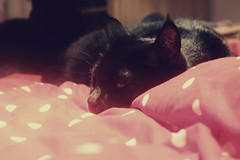 Frank (*Vindaloo*) Tags: cat frank hpad2013 hpad111113