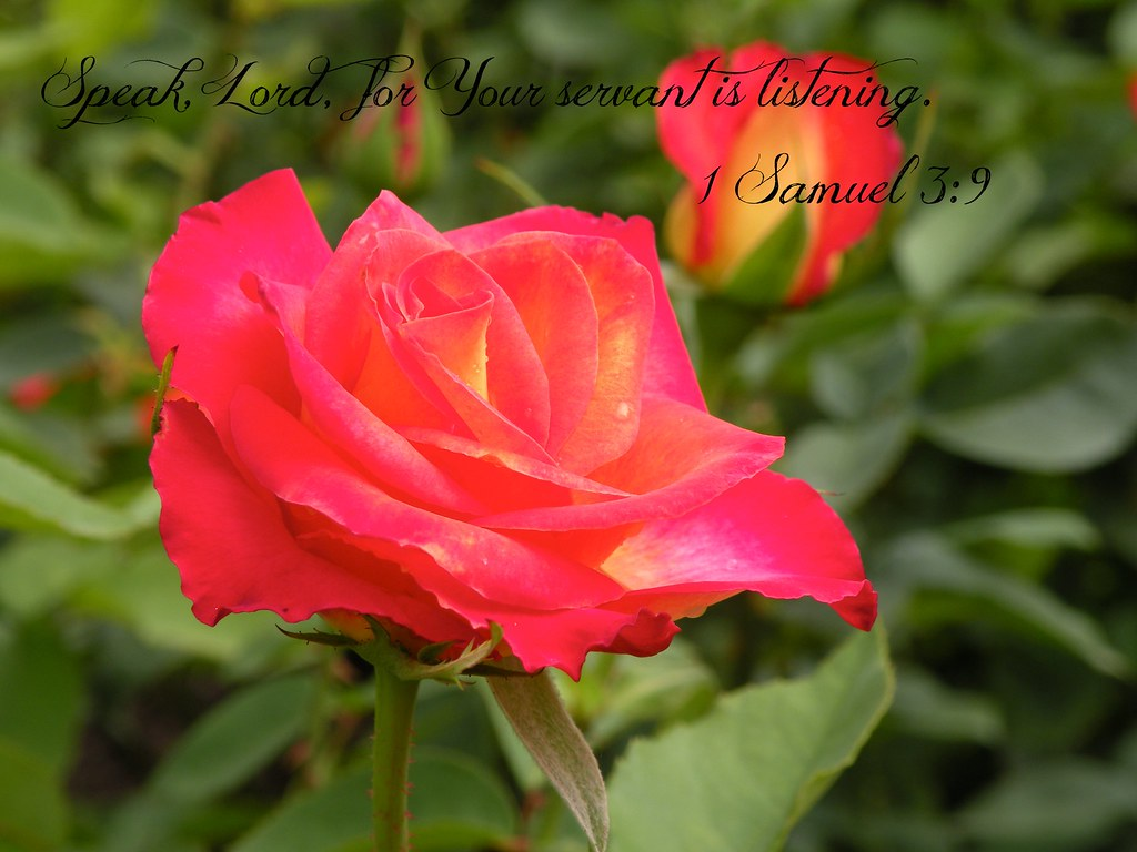 rose bud christian personals Triple s christian ranch inc (0) 165 christian ranch rd, rose bud, ar 72137 phone number phone number get directions rose bud, ar 72137 get directions.