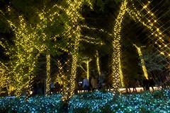 Xmas Illumination at Tokyo Sky Tree Town -Winter Illumination 2013-2014 (Narihira, Tokyo, Japan) (t-mizo) Tags: christmas xmas light japan night canon tokyo illumination sigma    lr lightroom sumidaku      oshiage skytree lr4 sigma175028 sigma1750  narihira sigma1750mm sigma1750f28  tokyoskytree sigma1750mmf28 eos60d  sigma1750mmf28exdcoshsm sigma1750mmoshsm lightroom4 sigma1750mmf28exdcos sigma1750exdc skytreetown