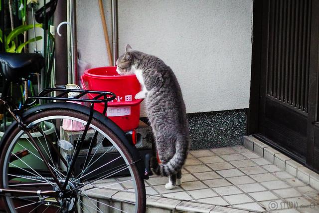 Today's Cat@2013-11-27