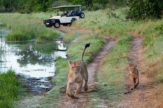 Botswana Okavango Delta Photo Safari 87