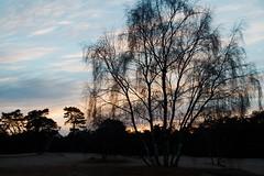 Soester Duinen (F.d.W.) Tags: sunset sun holland netherlands dutch canon landscape dawn highlands high zonsondergang sand europa europe dusk nederland eeg sands landschap eec kerst zand wandeling corel soest schemer avondrood fdw abovesealevel aftershot eos7d canoneos7d canon7d fransdewit wwwflickrcomphotosfransdewit corelaftershot kerstwandeling2013