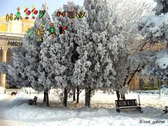 Happy New Year 2014! (cod_gabriel) Tags: winter snow frost hoarfrost romania newyearseve greetingcard greeting bucharest neujahr capodanno bucuresti anonovo happynewyear aonuevo nouvelan bukarest roumanie jourdelan felizanonovo nytr 2014 masca revelion boekarest bucarest glcklichesneuesjahr romnia bonneanne buonanno anulnou bucureti felicitare tahunbaru mutluyllar   newyeargreeting anobom bucareste teatrulmasca     newyeargreetingcard