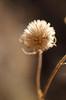 (SarahB 1217) Tags: winter macro nature closeup nikon 40mm nikond7000