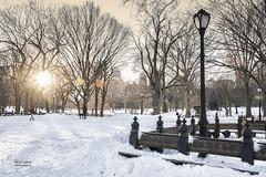 Central Park (dybcar) Tags: park nyc trees winter sun snow ny newyork lamp centralpark manhattan bigapple