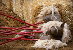 Horsies (HacksawGeneDuggan) Tags: horse toy photo kid cowboy child sony cybershot rodeo stick hay stickhorse sonydsch50