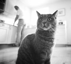 _GR19821 (wolfie2k) Tags: white black tiara monochrome norway cat norge nikon angle wide 20mm aust d600 grimstad agder fevik