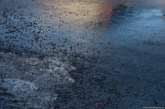 3 februari 2014 (fotografannie) Tags: asphalt vision:outdoor=0984 vision:sky=0887