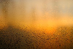 Back Yard Sunrise Through Dew Covered Window (Gio-Photography) Tags: club nikon owners d3000