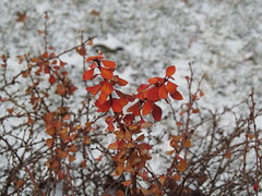 Which season? (imagination-in-a-bottle) Tags: winter red orange snow leaves seasons