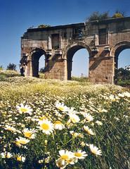 Patara, Turkey (east med wanderer) Tags: turkey ruins arch roman turkiye wildflowers turchia patara turkei gelemis