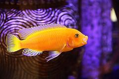Fish (flutterbye216) Tags: fish canon aquarium twisted app ipad challengeclubchampion