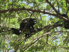 Costa_Rica_Feb_2014 (will17b35) Tags: costa rica tamarindo