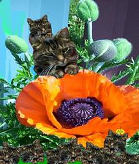 Pot pourri floral 10, avec Roméo
