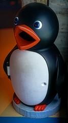 NootNoot (pigpogm) Tags: penguin photos bin plastic torquay livingcoasts panoedit mxpp nootnoot