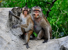 ,, Prom Photo ,, (Jon in Thailand) Tags: wildlife wildlifephotography monkeys primates promnightphoto jungle teeth eyes paws nikon d300 nikkor 175528 boulder boytoy promnight scary coneheads junglephotography