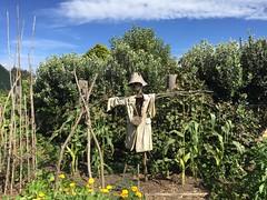 Hamilton Gardens (eyair) Tags: ashmashashmash nz newzealand hamilton gardens