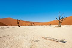 Deadvlei (yenz1985) Tags: ngc oldest highest tallest desert landscape landschaft namibia wüste africa afrika gröste dune big daddy düne 7 deadvlei deathvlei sossusvlei namib tree travel sand