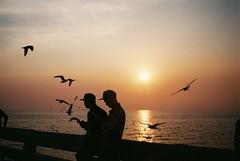 (SingC) Tags: bangpu film leicaminilux sunset