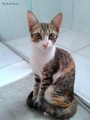 Suzie in bathroom ♥ (♥ MarildaHungria ♥) Tags: suzie cat kitty gato gata meow miau purrr cute pet animal