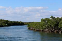 14. Mangroves (Misty Garrick) Tags: johnpennekamp johnpennekampreef johnpennekampcoralreefstatepark coralreef florida keylargofl keylargo floridakeys atlanticocean