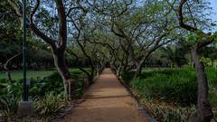 Has to lead somewhere... (chandra.nitin) Tags: deerpark nature newdelhi delhi india landscape tree trees green greenery path walkingpath