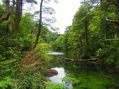 Naturaleza,bosques,Lago Chico,Parque Nacional Huerquehue (Gabriel mdp) Tags: bosques nature lago verde reserva parque nacional huerquehue araucarias coihues cordillera andes region araucania sur chile